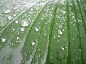 wet-leaf-1480549